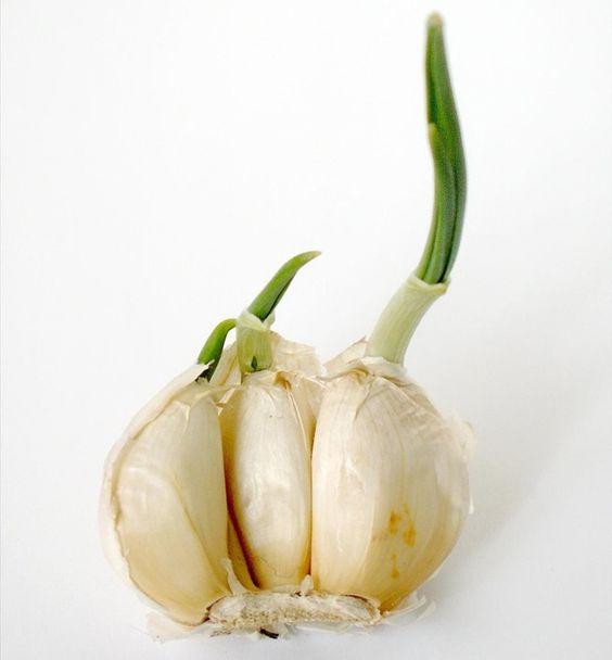 TU SALUD: 9 vegetales y hierbas que puedes comer una vez y volver a crecer para siempre