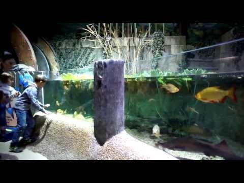 Animation anniversaire enfant à l'aquarium SEA LIFE