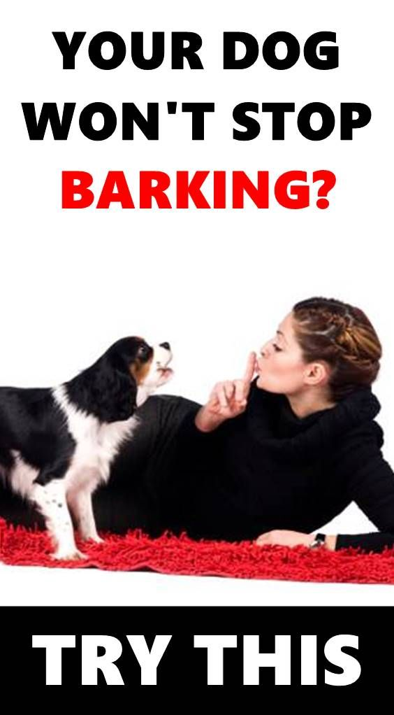 No One Should Expect A Dog To Never Bark But Some Dogs Bark