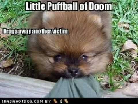 Funny Dogs And Puppies Youtube Funny Animal Pictures Cute Animals Funny Dog Memes