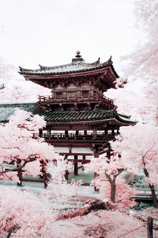 Sakura Blossom Tumblr Wallpaper By Artist Unknown