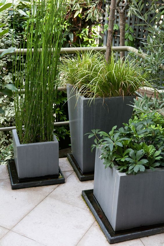 Interesting way to cultivate water loving plants green - Decorer terrasse avec plantes ...