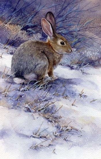 winter 39 s chill by joe garcia watercolor wildlife art. Black Bedroom Furniture Sets. Home Design Ideas