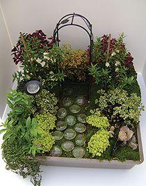 miniature pixie garden