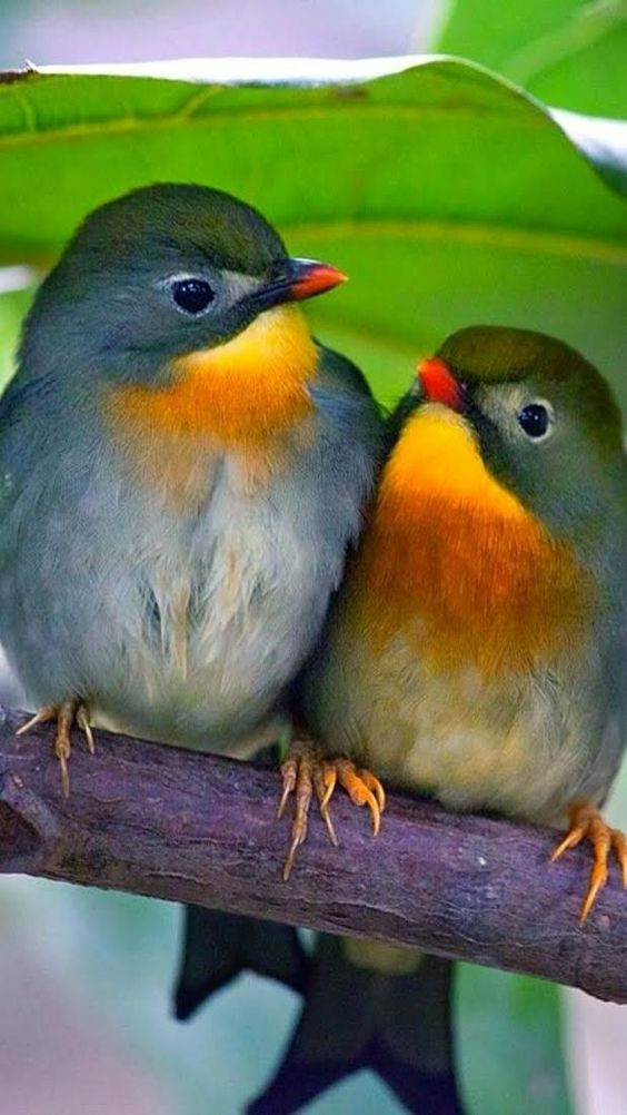 Pin By Trish Councell On Birds Birds Beautiful Birds Colorful