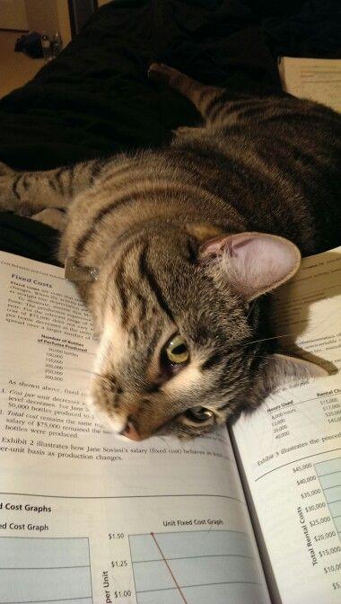 Turşu ödevimi yapmama izin vermiyor