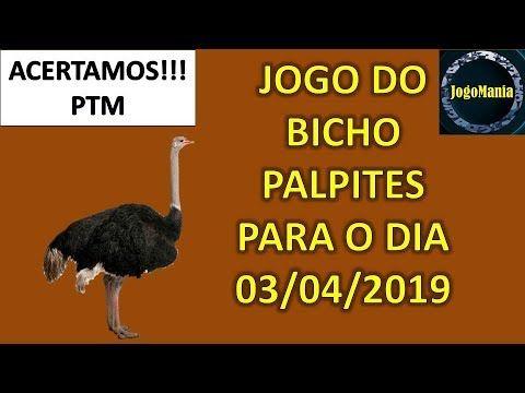 Palpite Jogo Do Bicho Para Todo O Brasil 03 04 2019 Jogo De
