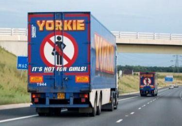 Yorkies roughn' it