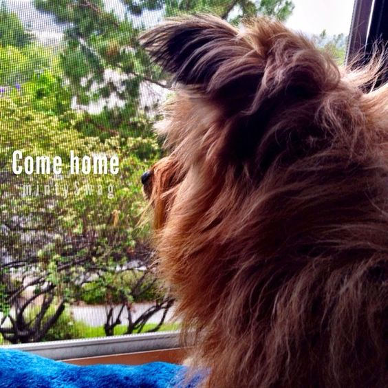 Come home! he was staring at the window watching the rain..  so cute #adventurewithbabydexter @bunbunnysmile