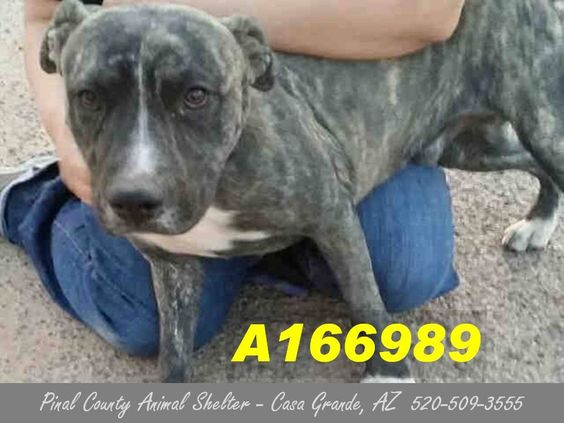 ***CODE RED - NEEDS A COMMITMENT HOLD BY 5:30 AM PDT SATURDAY, JULY 11, 2015*** THIS 6 MONTH OLD MALE BRINDLE PIT BULL MIX NEEDS A FOSTER/ADOPTER/RESCUE ASAP! Can you give this beautiful boy a home?
