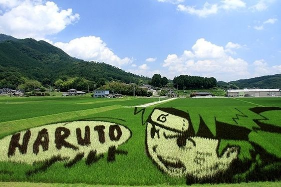 Some of them draw from J-Pop culture. | 15 Insane Works Of Japanese Rice Paddy Art