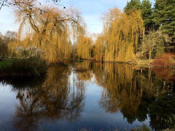 Gooderstone Water Gardens Norfolk