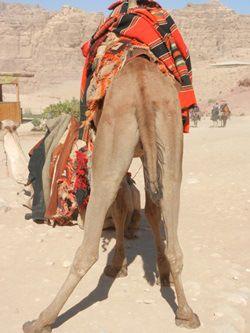 Liesbet à Paris - Jordan - A camel