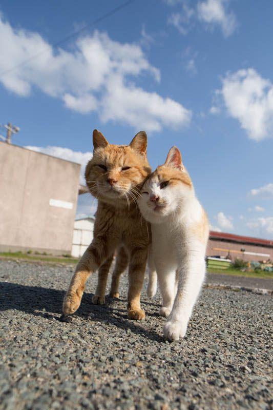 デート中の野良猫のカップル)