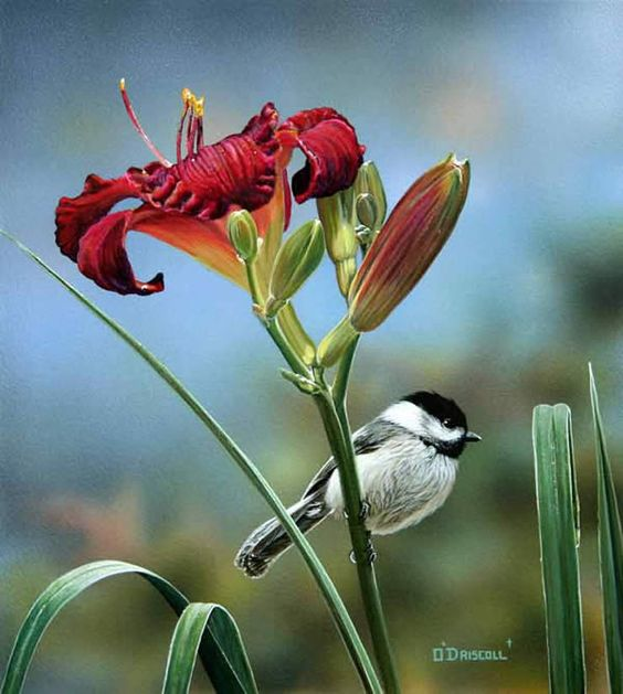 Daylily 4 Chickadee an acrylic painting by Wildlife Artist Danny O'Driscoll