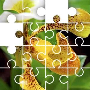 Slipper Orchid Jigsaw Puzzle, 67 Piece Classic. Yellow Orchid Paphiopedilum.  These slipper orchids are native to South
