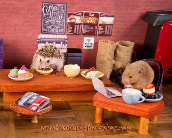 Hungry Hedgehog and His Hamster Buddy Enjoy a Few Snacks While Working at a Tiny Café: