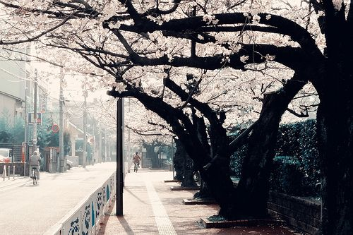 福岡市 中央区 赤坂