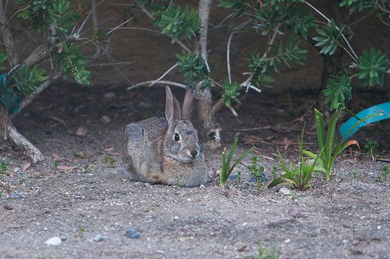 Just a wild bunny relaxing in the yard http://ift.tt/1PPm4n4