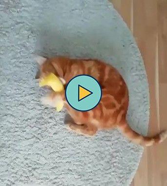 gatinho se divertindo com uma banana