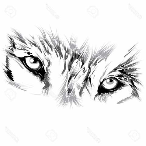 Fascinating Matching Wolf Eyes Clipart Clipartxtras Style Photos Wolf Eye Tattoo Eye Tattoo Wolf Tattoos