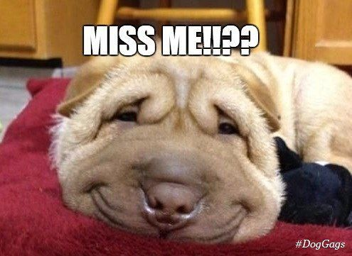 Funny I Miss You Memes 2018 I Miss You Memes For Him Her Missing You Memes Miss You Funny I Miss You Meme