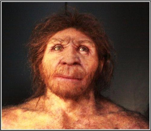 HOMO ANTECESSOR Eran individuos altos, fuertes, con rostro de rasgos arcaicos y cerebro más pequeño que el del hombre actual, y con menos circunvoluciones cerebrales.