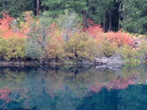 "Taken at a place called ""Clear Lake"" in central Oregon in October.  The water is so very clear it is amazing, beautiful."