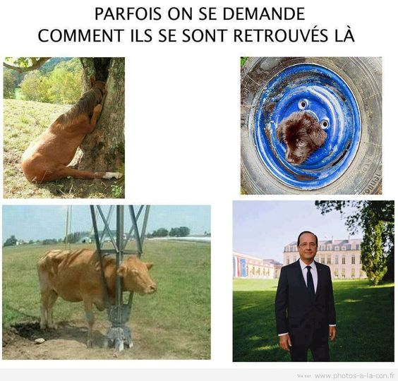 image drole hollande: