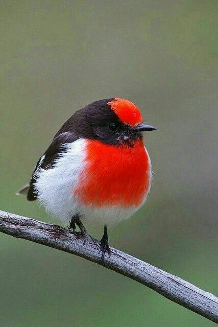 Les plus beaux oiseaux  28e2eb5f4803e59dc8909b7da9ef43d0