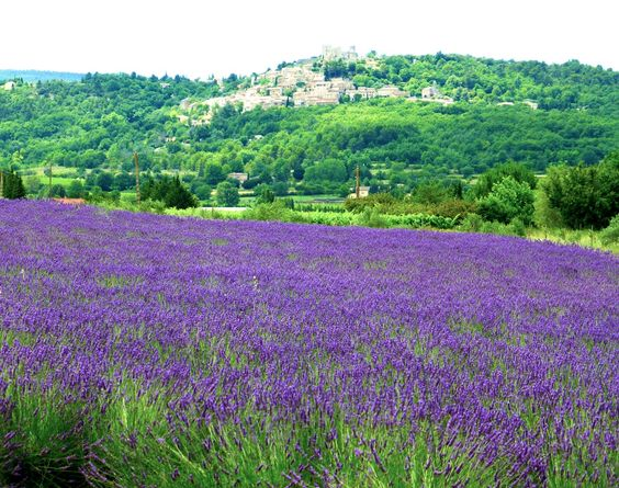 Lacoste, from the Lavender fields, Provence, France