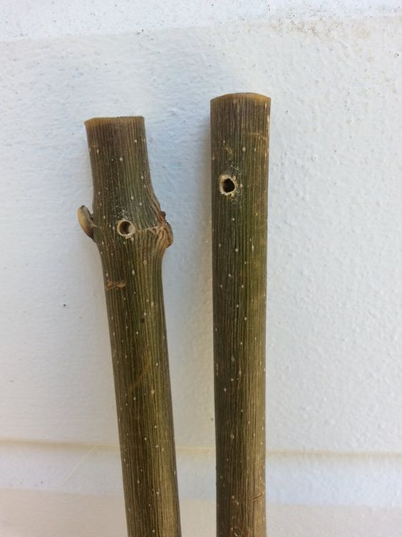 drilled wood sticks wood branches poplar by Pineneedlesweetgrass