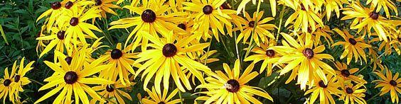 Hypnose – Atemtherapie – Massagen, Ursa Mebus, Heilpraktikerin, Schirmerstr. 18…