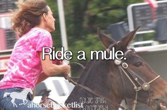 Ride A Mule