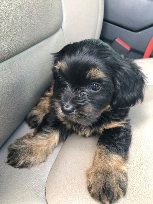 Chanel Mixed Breed Puppies Small Puppies Puppy Breeds