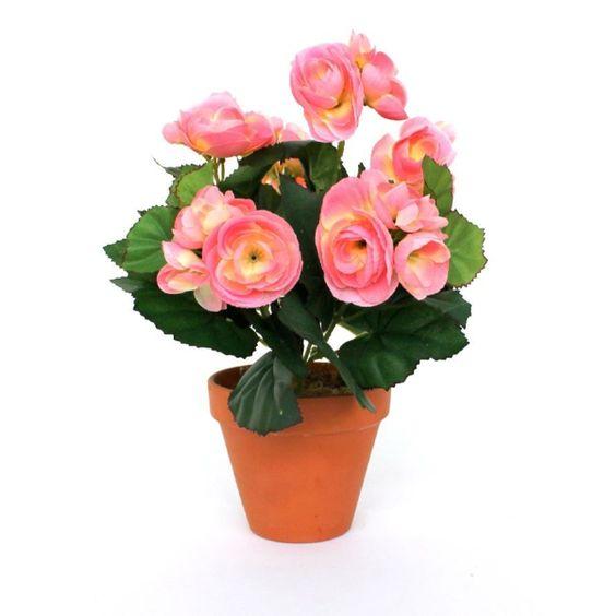 Begonien Pflege - Was Die Schönen Begonien Brauchen, Um Gut Zu ... Garten Gestaltung Und Pflege