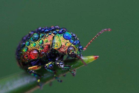 A beautiful little jewel of nature.