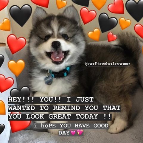 I Love Doggos And My Boyfriend Ilovemyboyfriend Lovequotes Love Committed Whatisthis Kisskiss Funny Mom Memes Memes Funny Faces Love Boyfriend