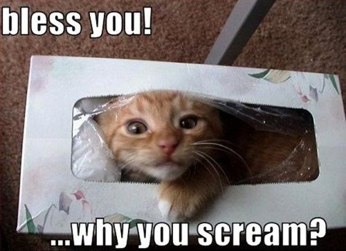 Awe bless you too little orange kitten. :D