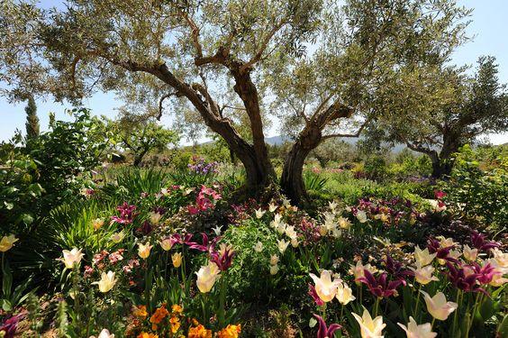 Beneath the Olive Tree - Mural de pared y papel tapiz fotográfico - Photowall