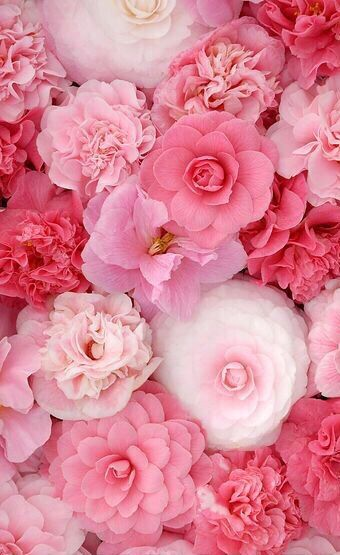 pink flowers ✿⊱╮