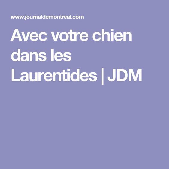 Avec votre chien dans les Laurentides | JDM