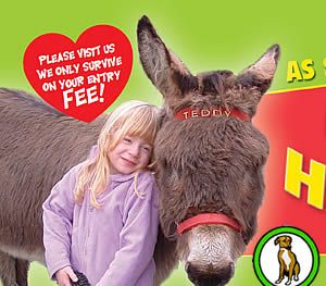 Visit Cornwall's Happiest Donkeys