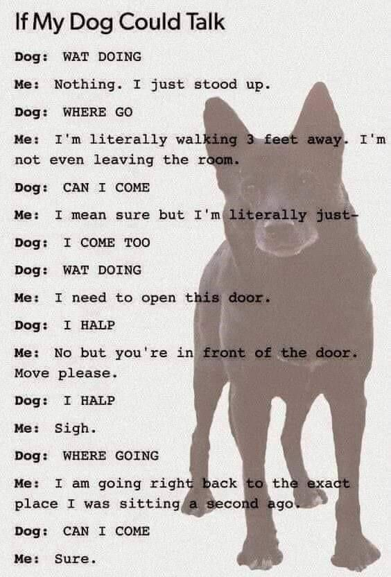 If My Dog Could Talk If Dogs Could Talk Dog Quotes Funny Dogs