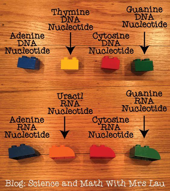 nucleotides-01