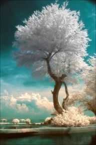 """Red and Blue colour channels of the infrared image are adjusted to produce this effect called """"false colour"""""""