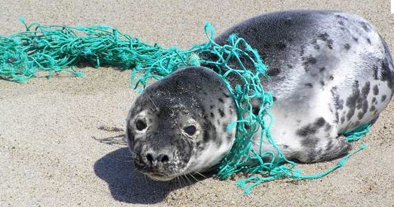 why do people not care that this happens? nets should be completely torn so that marine animals don't get stuck in them!