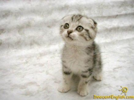 puppies and kittens pictures | Really cute puppies and kittens pictures 1