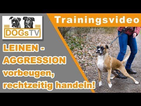 Leinenaggressionen Vorbeugen Ausloser Erkennen Rechtzeitig Handeln Hundebegegnungen Ohne Stress Youtube Hunde Hund Unterwegs Hundeerziehung