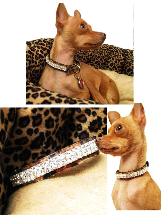 Collars, clothes and supplies for dogs and cats in fun and exotic animal print.